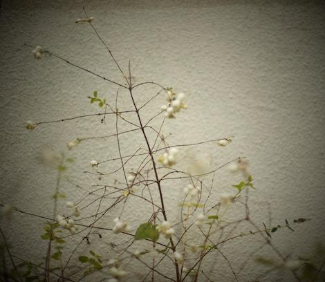 Växt mot vägg 2