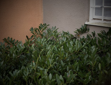 Växt mot vägg 1