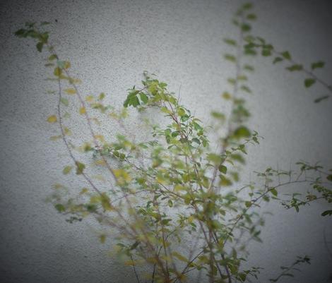 Växt mot vägg 3